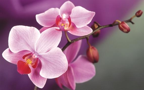 Комнатные растения помогут от бессонницы