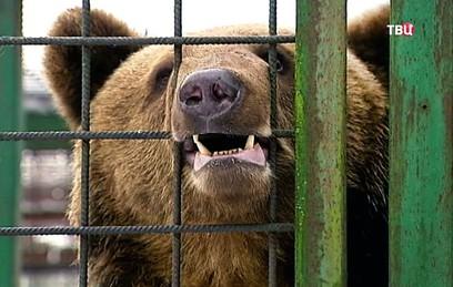 Центр реабилитации диких животных в Петербурге просит о помощи для питомцев