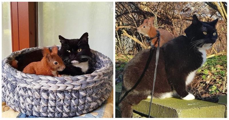 Пушистые друзья: неразлучные кот с белкой из Дании