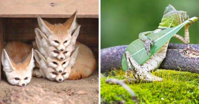 Фотографии животных, сделанные в самый нужный момент