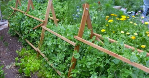Это поможет уберечь ваш сад от болезней и вредителей