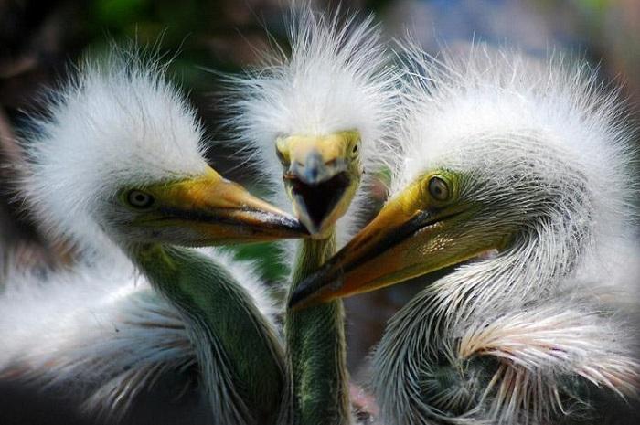 Угадай с трех раз: чьи это птенцы?