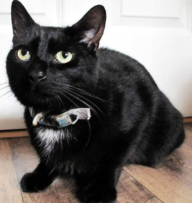 Кот спас впавшую в кому хозяйку