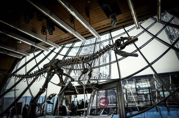 Редкий скелет динозавра продали на аукционе за 2 млн евро