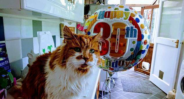 Самый старый кот в мире отметил 30-летие: видео именинника