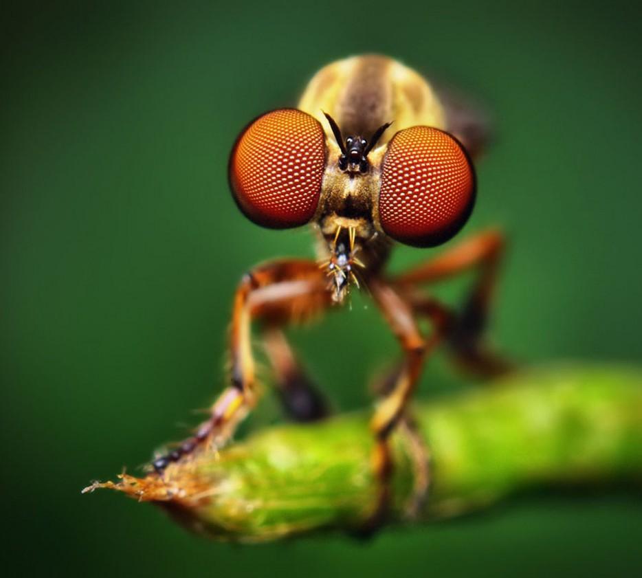 35 потрясающих  снимков насекомых