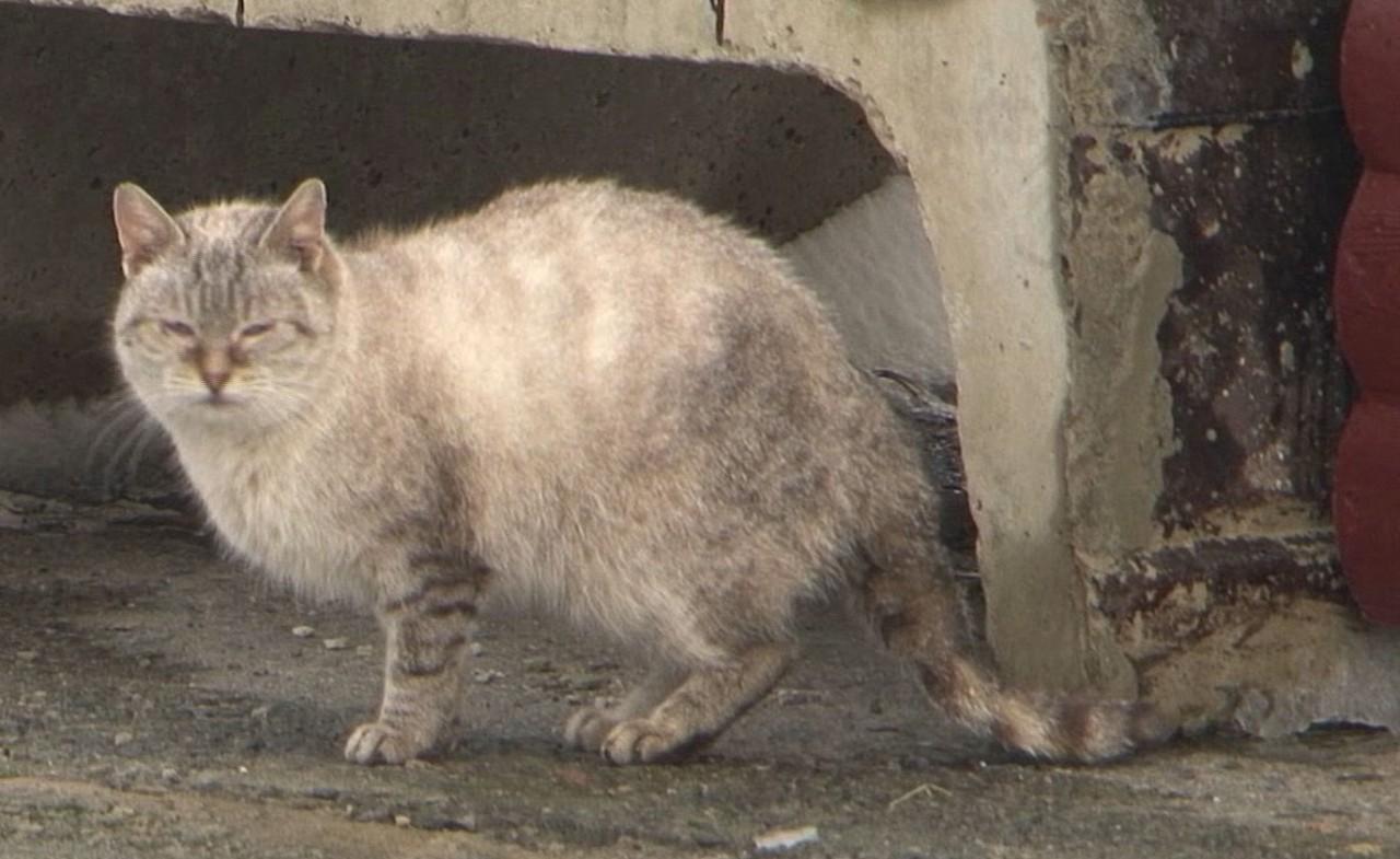Теперь ушки и хвостики будут согреты! В Кобрине (Беларусь) устанавливают домики-люкс для бездомных котов