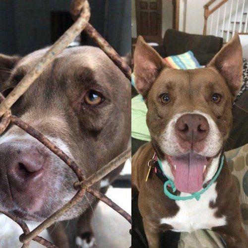 Фотографии собак до и после того, как обрели любящий дом