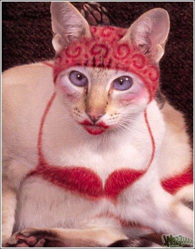 Как сделать своих кошек красивыми