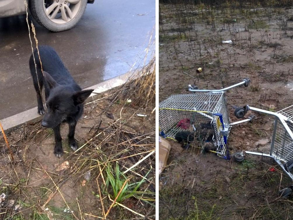 Собака отчаянно звала прохожих – ведь в тележке из супермаркета умирали её щенки