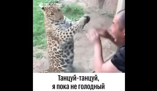 Кошачьи танцы