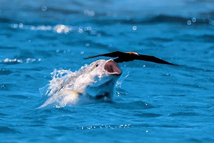 Как рыбы охотятся на птиц