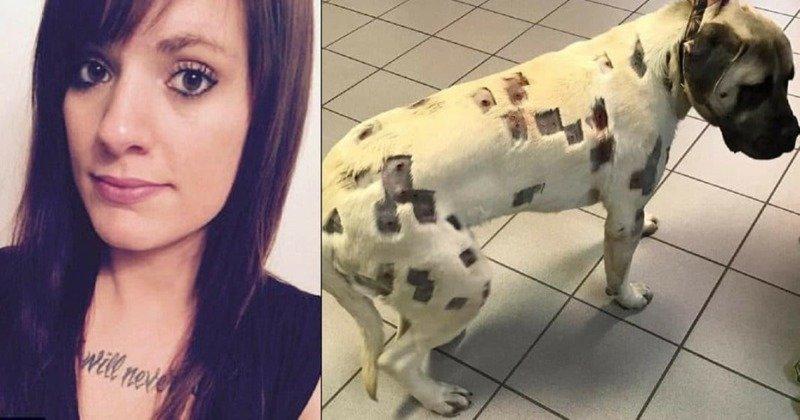 Ветеринары вытащили из пса, которого обстрелял сосед, 27 пуль