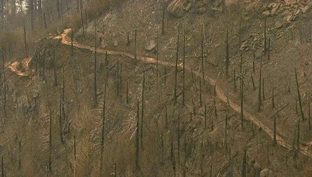 В США суд обязал украинского подростка выплатить 36,6 миллиона долларов за лесной пожар