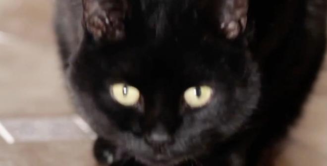 Больше девяти миллионов просмотров! А вы знаете что делают коты по ночам?