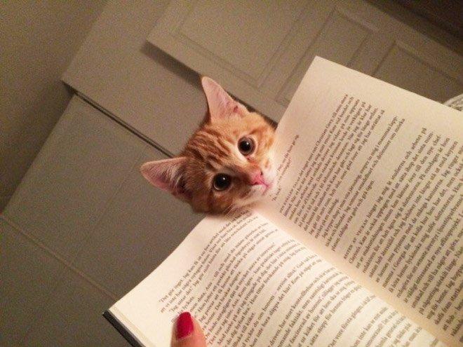 Коты, которые любят мешать своим хозяевам
