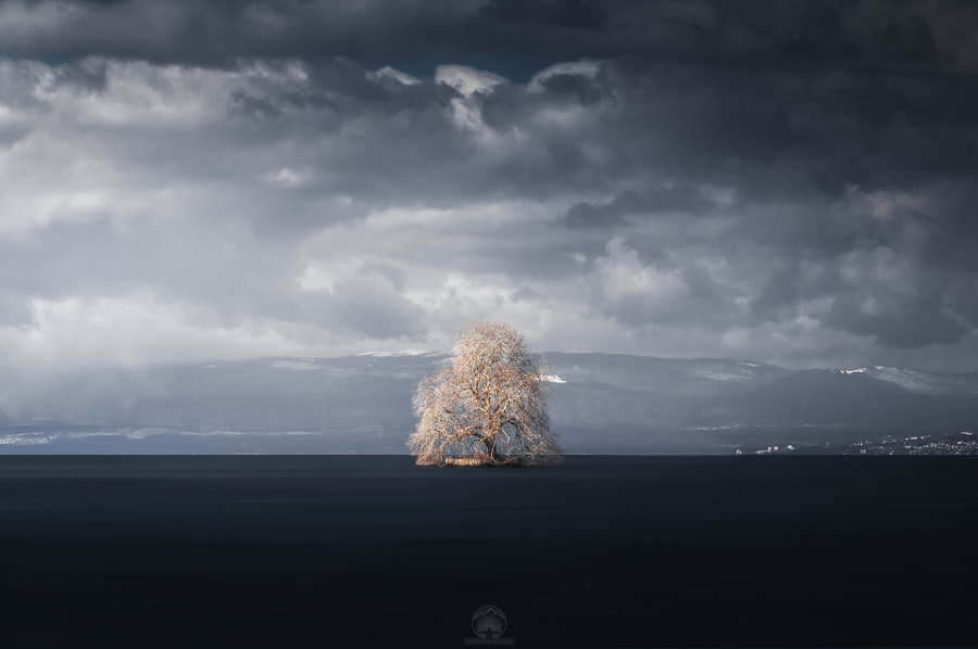 Alone by Maurizio Verdecchia Photography  on 500px.com
