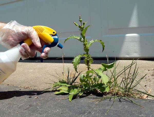 Гербициды продаются и применяются садоводами