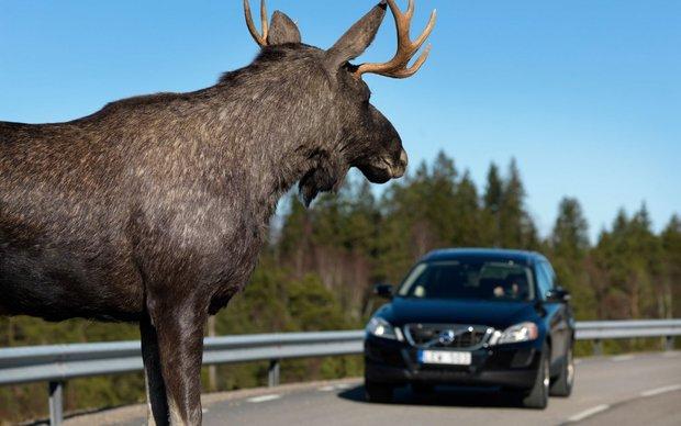 Животные против автомобилей: 9 шокирующих историй