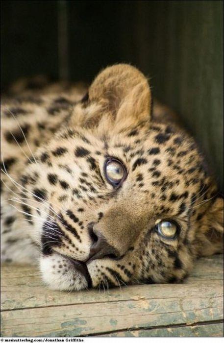 Необычайной красоты фото дикой природы. (39 фото)