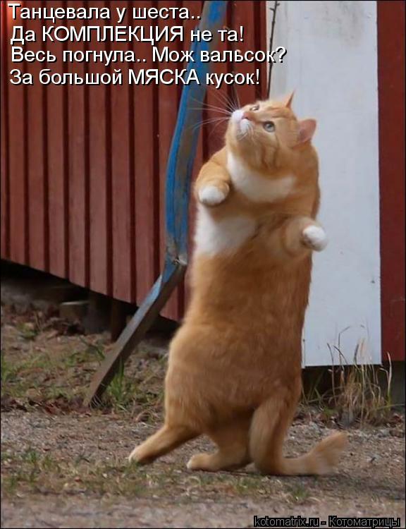Котоматрица: Танцевала у шеста.. Да КОМПЛЕКЦИЯ не та! Весь погнула.. Мож вальсок? За большой МЯСКА кусок!