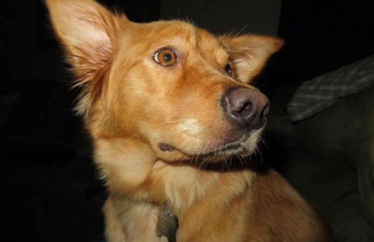Приемная семья была очень удивлена, увидев каких странных щенков родила их новая собака