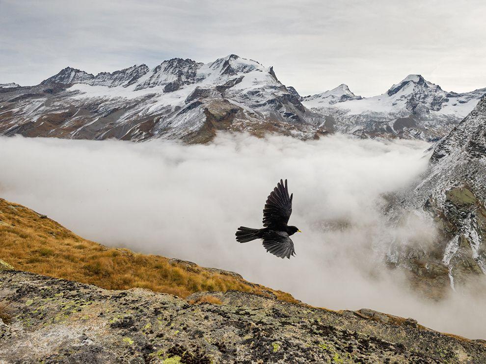 Национальный парк Гран-Парадизо — старейший национальный парк Италии