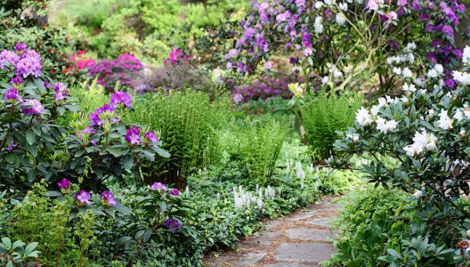 Cад, огород и теплица: Календарь садовода на июнь