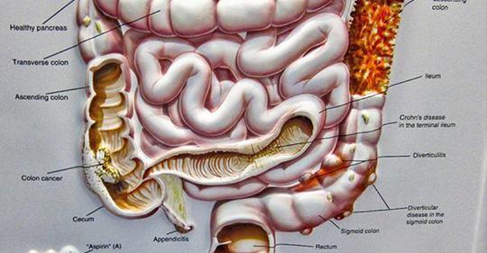 Как бактерии в кишке влияют на наш разум