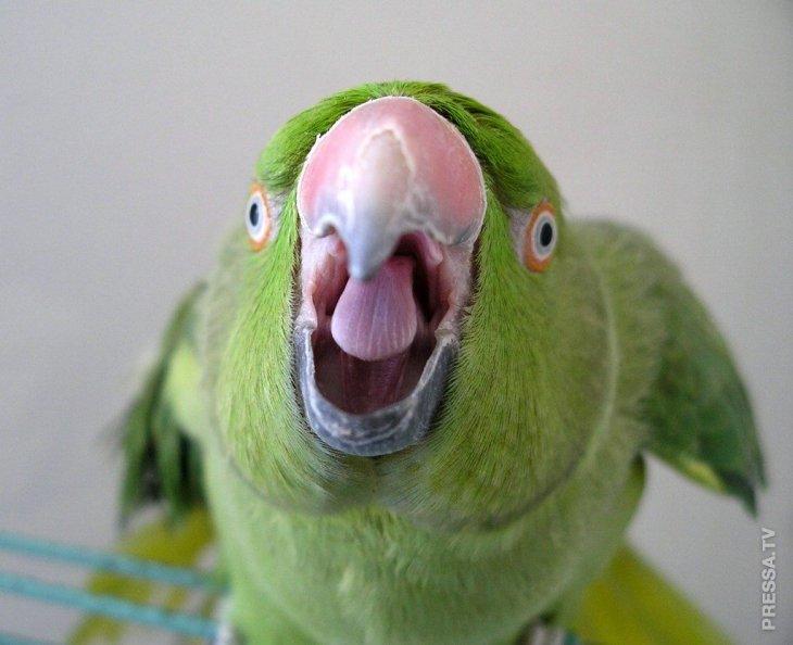 Меня ревнует к мужу… попугай