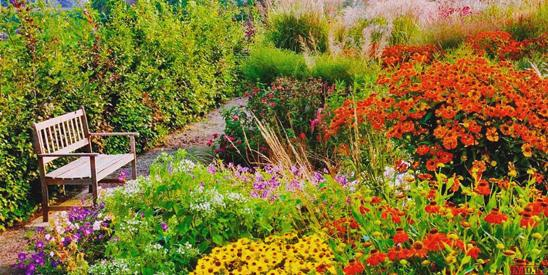 Подкормки, чтобы цветы росли, как на дрожжах