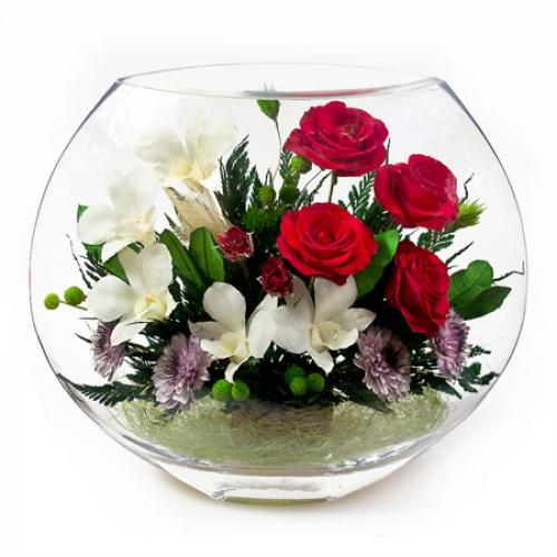 цветы цветущие мелкими цветами фото комнатные с названием