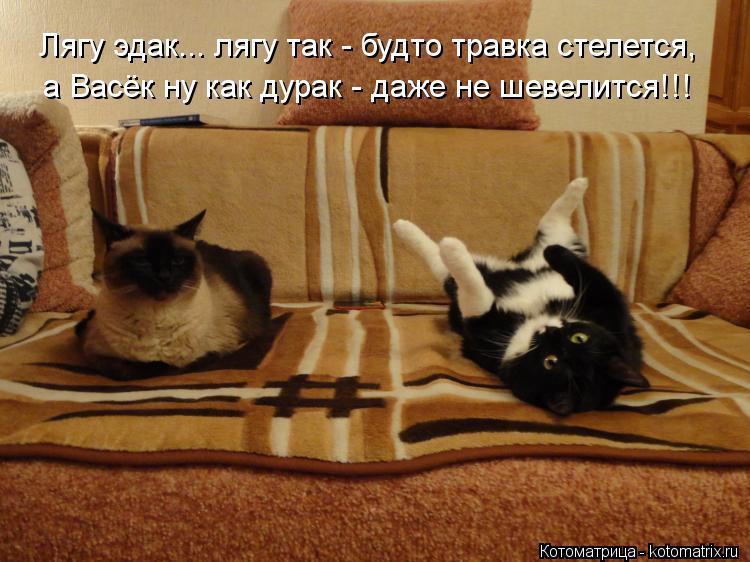 Котоматрица: Лягу эдак... лягу так - будто травка стелется, а Васёк ну как дурак - даже не шевелится!!!