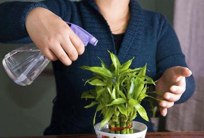 Вот что нужно делать, когда уезжаешь и некому полить цветы