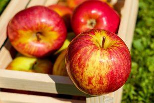 Что за продукты с отрицательной калорийностью?