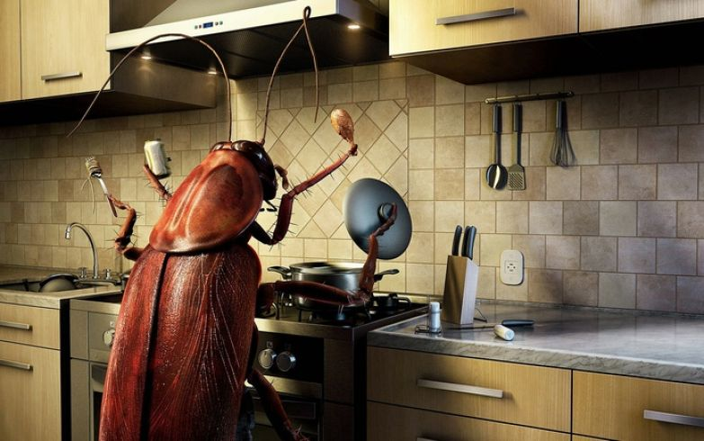 Если это растение будет у вас дома, вы никогда не увидите мух, пауков и других насекомых