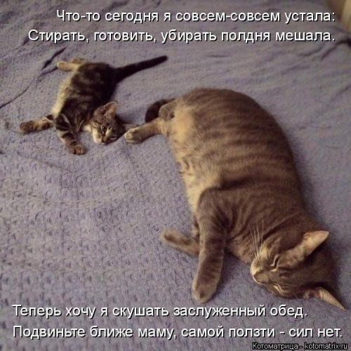 Новый выпуск котоматрицы