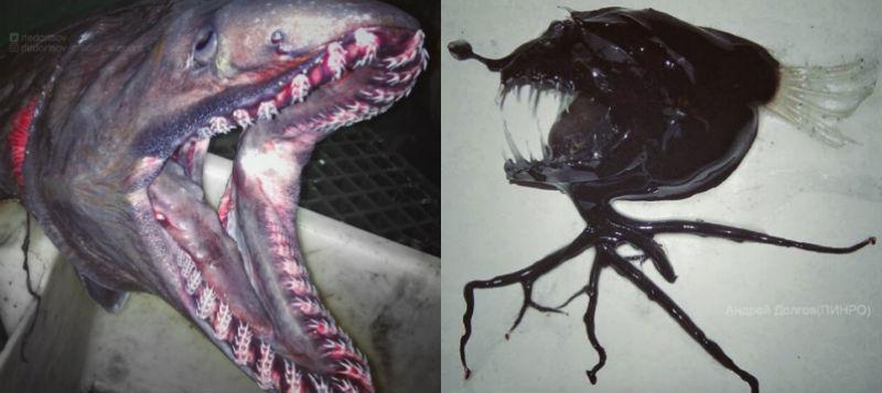 Инопланетные монстры из глубин: моряк из Мурманска продолжает пугать соцсети фото пойманных рыб