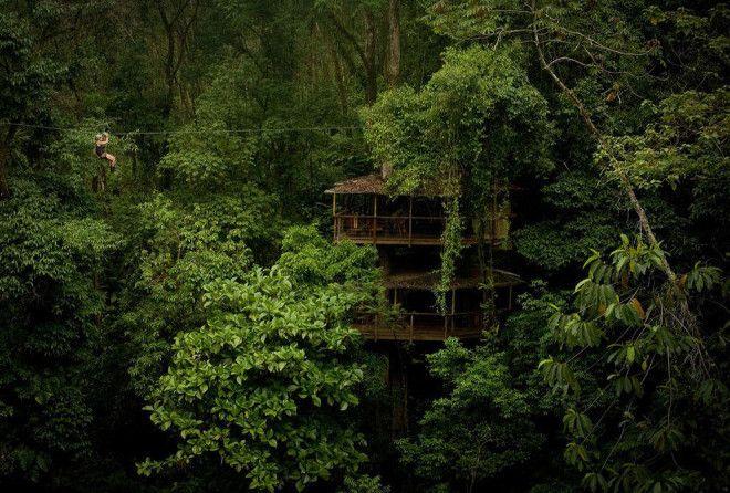 Уникальная коммуна на деревьях