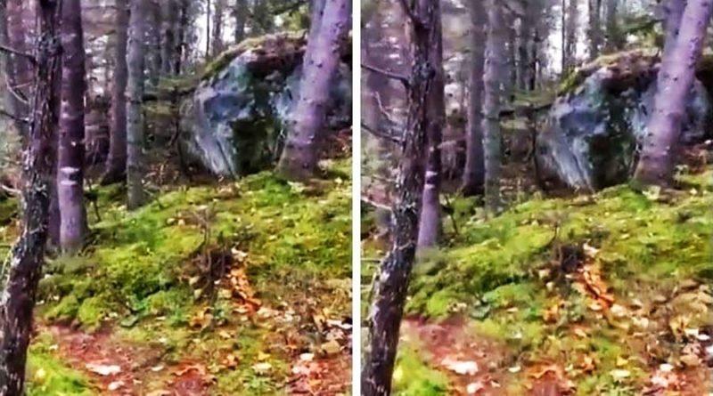 «Дышащая» земля в канадском лесу смутила интернет