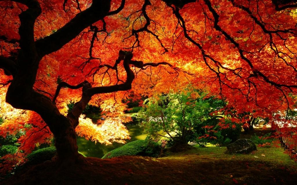 fall01 10 осенних фотографий, которые стали хитами в блогах