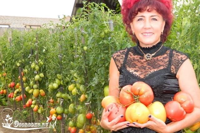 Отличная рассада помидоров – пошаговый метод Натальи Щербининой
