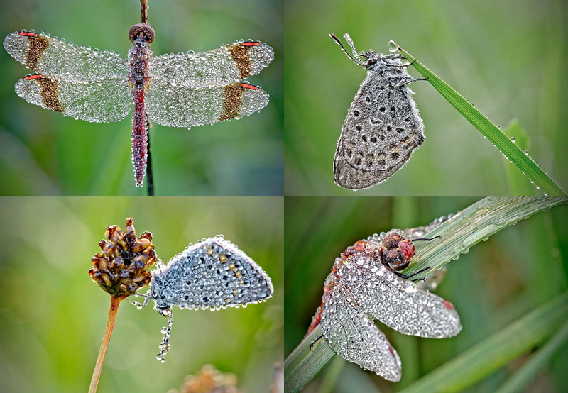 BIGPIC28 «Драгоценные» насекомые Давида Шамбона
