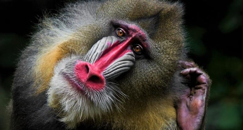 7 самых незаурядных приматов…