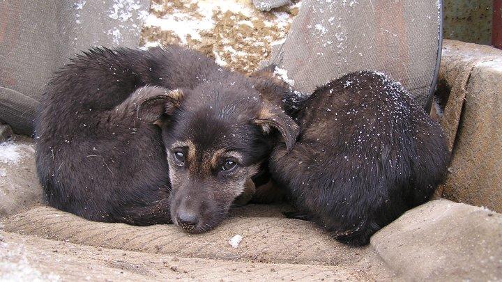 Звериная жестокость: Школьники в Башкирии начиняли живых щенков петардами и взрывали