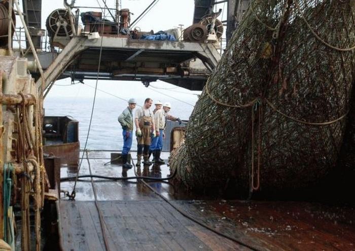 При разборе улова перед рыбаками открылось кошмарное зрелище. К такому сложно привыкнуть!