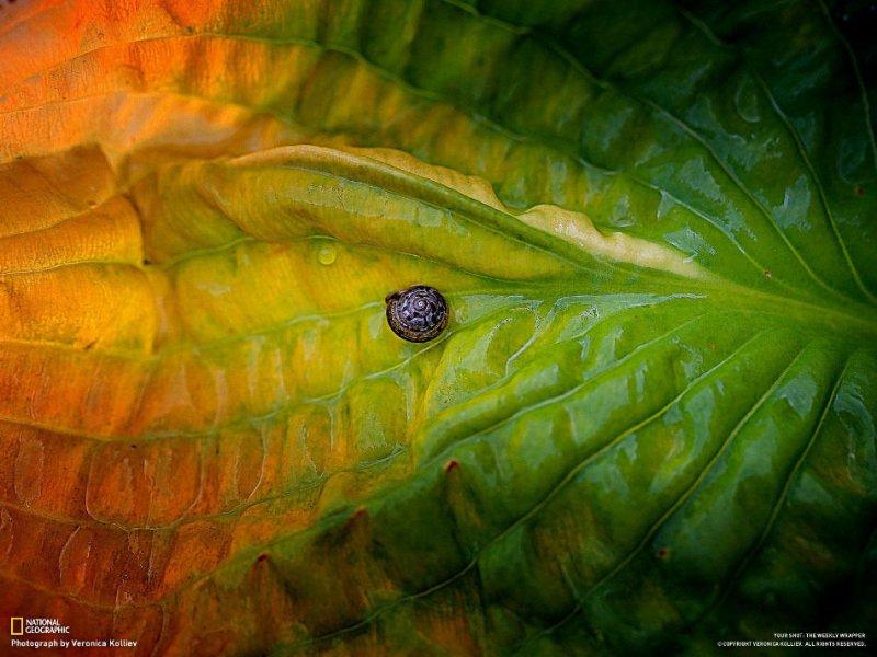 Подборка замечательных фотографий от National Geographic