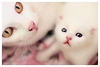 Кошки и Котята 83