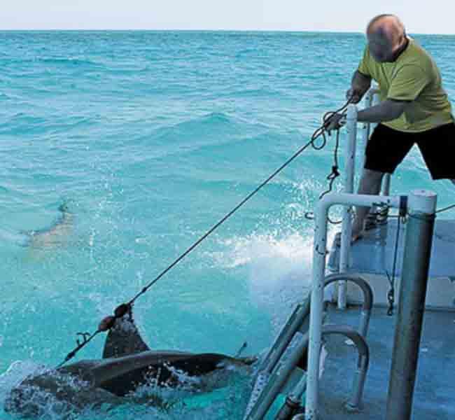 бесплатно фильмы что касается рыбалке на океане