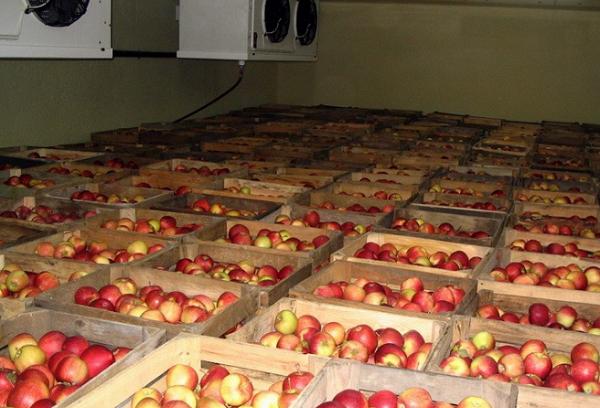 яблоки в ящиках